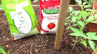 How To Grow Large Beefsteak Tomatoes:  Get Them Ready, Mulching,  Pruning, Staking, Fertilizing 2of6