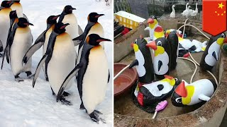 Gambar cover Zoo in China tricks zoo-goers into paying money to see inflatable penguins - TomoNews