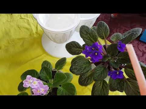 Шарики из тыквенных семечек от простатита