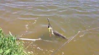 Рыбалка в ростове на дону ростовское море