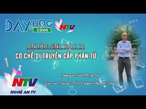 MÔN SINH HỌC 12 - ÔN TẬP: CƠ CHẾ DI TRUYỀN CẤP PHÂN TỬ - 17H NGÀY 22/3/2020 (NTV)