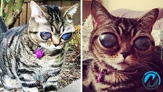 Cat Owners Notice Her Eyes Look Strange And Then They Expand To The Size Of Golf Balls