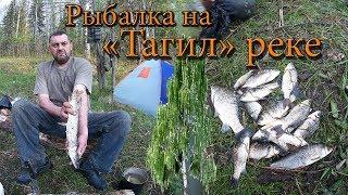 Клев рыбы в нижнем тагиле
