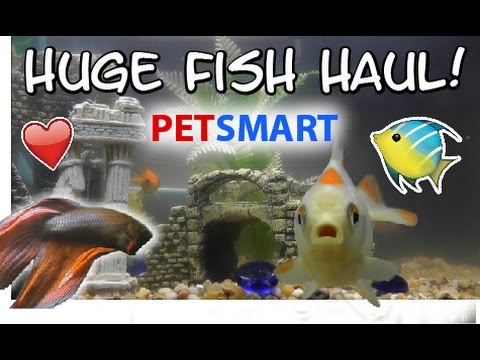 HUGE Petsmart Fish Haul!