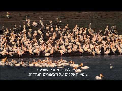 התחממות גלובלית והשפעתה על עולם הציפורים