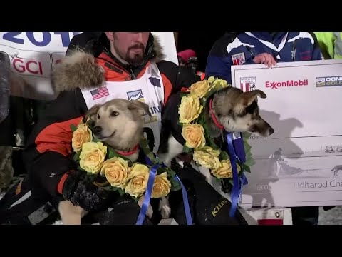 Pete Kaiser won the Iditarod Trail Sled Dog Race early Wednesday, throwing his arms over his head and pumping his fists as he became the latest Alaska Native to claim victory in the iconic competition. (March 13)