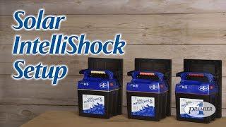 Solar Intellishock 174 60 Energizer Amp Kit Premier1supplies