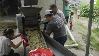 Sifting Through the Beans