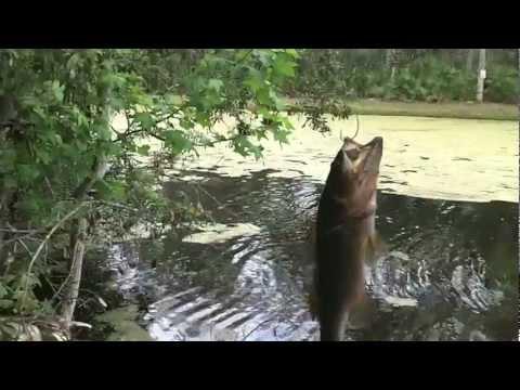 Spring Pond Bass Fishing (Spawn-Post-spawn)