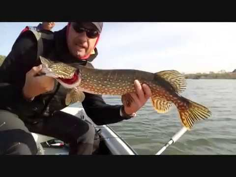 Csuka pergetés. Pike spinning with Berkley Pulse XCD.