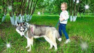 Волшебный сон маленькой девочки про собаку Хаски Видео для детей Funny magic dreams of a little girl