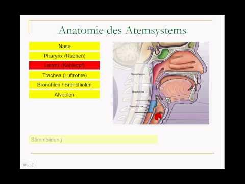 Ursachen von Bluthochdruck in der Rückenlage