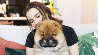 One Million Subscribers & My Chow Chow Puppy!