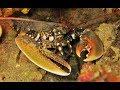 Diving Krk - Croatia, Submalin DC, Malinska, Krk, Kroatien