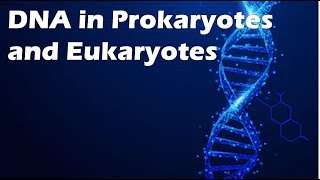 DNA in Prokaryotes and Eukaryotes