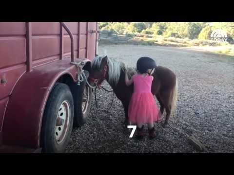 ילדה קטנה מנסה בעיקשות לטפס על גבו של סוס פוני