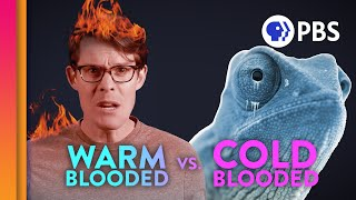 Why Are We Warm-Blooded?