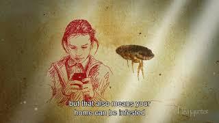 Ralston Vet's Guide to Fleas