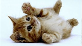 Милые котики и очаровательные котята   Подборка приколов про котов