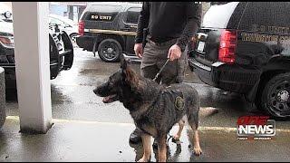 broward county k9 unleashed - मुफ्त ऑनलाइन वीडियो