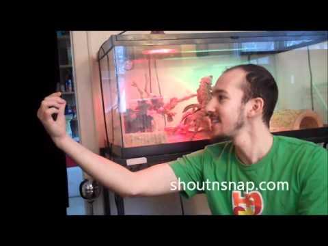 Video of Shout n' Snap Lite
