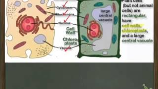 FCAT Practice: Cells