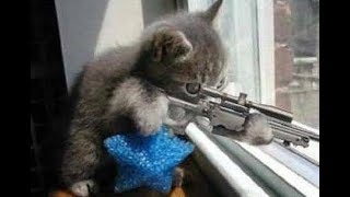 ЛУЧШИЕ ПРИКОЛЫ с котами  Самые смешные видео про кошки и коты  Подборка приколов на канале ПРИКОЛЫ Т
