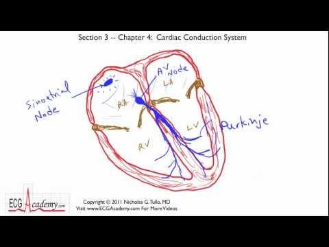 Interpretacja EKG - Układ Przewodący Serca, 3-4