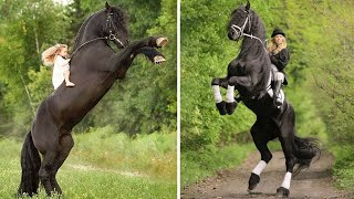 Cute And Funny Horse Videos Compilation Cute Moment Of The Horses - Cutest Horse #01