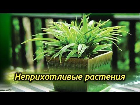 Комнатные растения для ЛЕНЬТЯЕВ! Самые неприхотливые  растения.