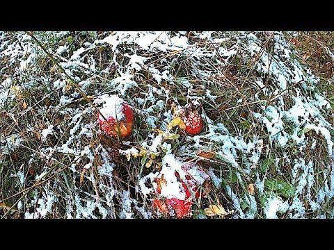 Перший Сніг в горах Карпатах \ The first Snow in the Carpathian Mountains