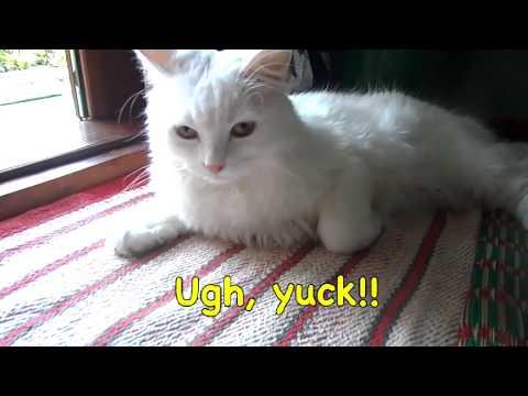 Cat worm ay isang mahusay na paghahanda