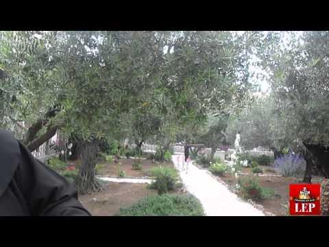 Papa sembrará un árbol de olivo en el huerto de Getzemaní