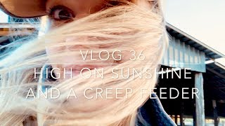 High on Sunshine & A Creep Feeder