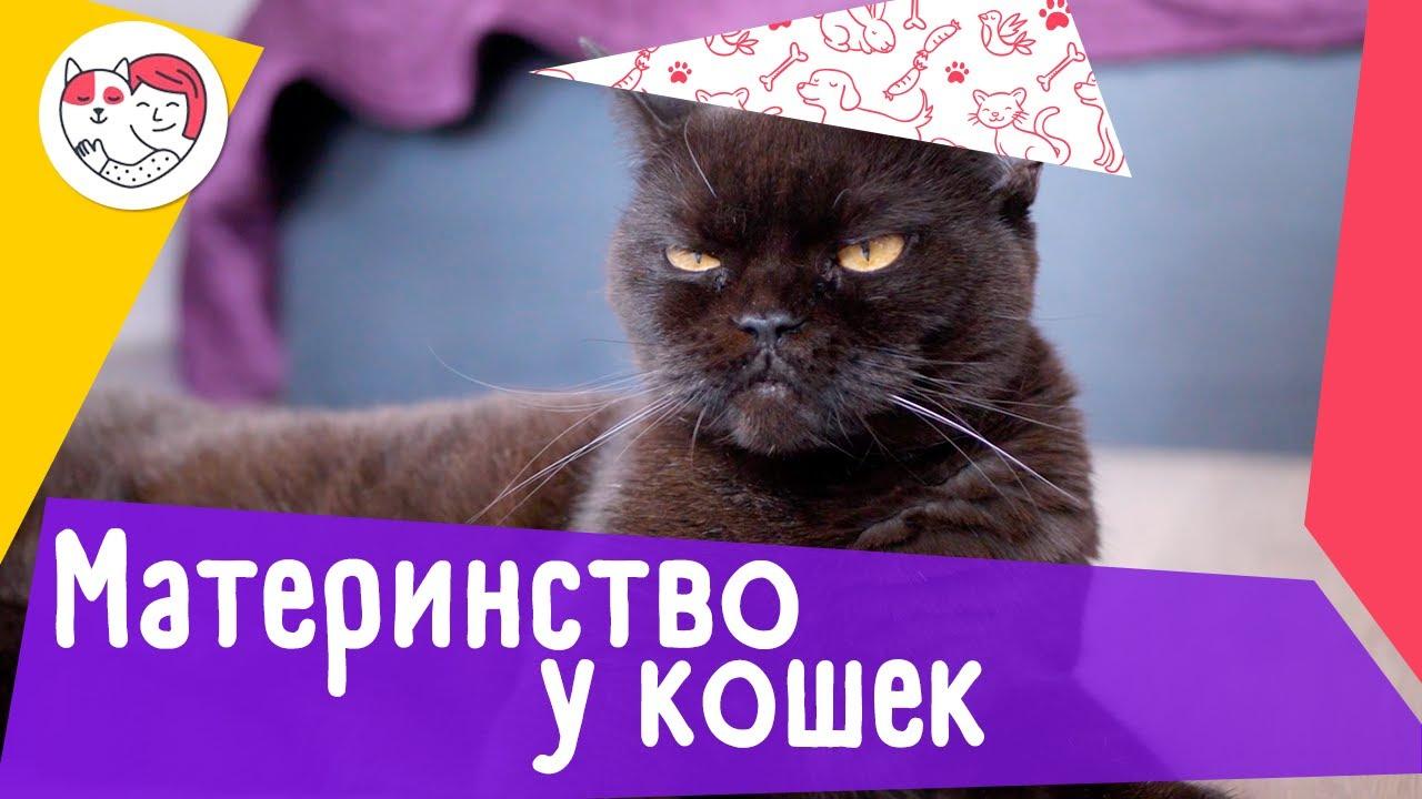 5 популярных вопросов про материнство у кошек