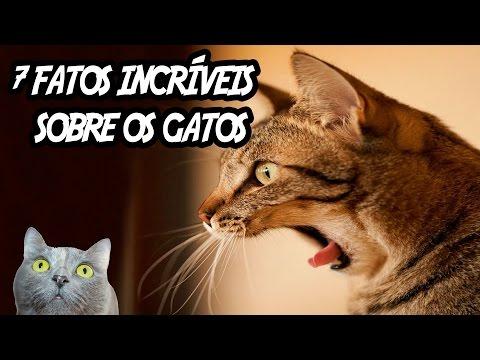 7 fatos incríveis sobre os gatos