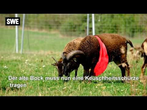 Partnersuche landkreis rosenheim