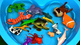 Learn Zoo Wild Animals Names Educational Toys Video For Children