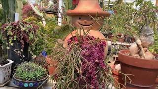 Upland Nursery Cactus Garden Tour 2020