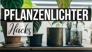 Pflanzenlichter günstig selber bauen | Pflanzen zum wachsen bringen | DIY Growlights