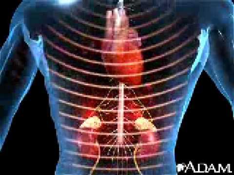 Knoblauch für Hypertonie contra