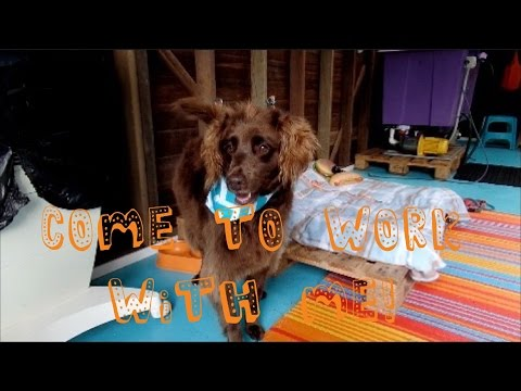 , title : 'My Home Business | Dog Grooming Shop