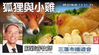 狐狸與小雞 (路加福音13:31-35) - 蘇穎睿牧師