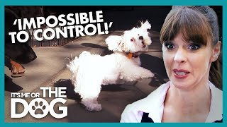 Cute Dogs Turn AGGRESSIVE On Walks | Its Me Or The Dog