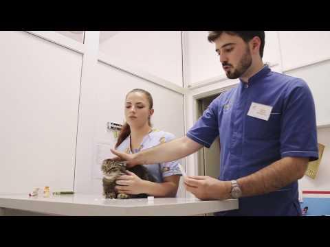 Таблетки от глистов для человека профилактика в украине