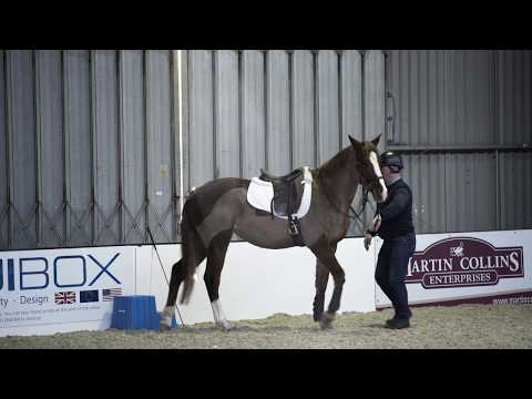 Horse refusing to stand at mounting block meets Richard MaxwellYour Horse