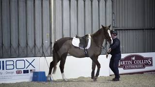 Horse refusing to stand at mounting block meets Richard Maxwell | Your Horse