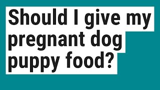 Should I give my pregnant dog puppy food?