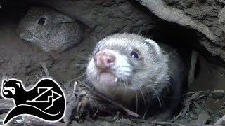 Tunnel Hunter - Sunrise Ferreting 15