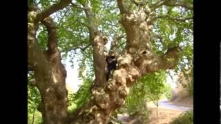 işıklar köyü sındırgı balikesir